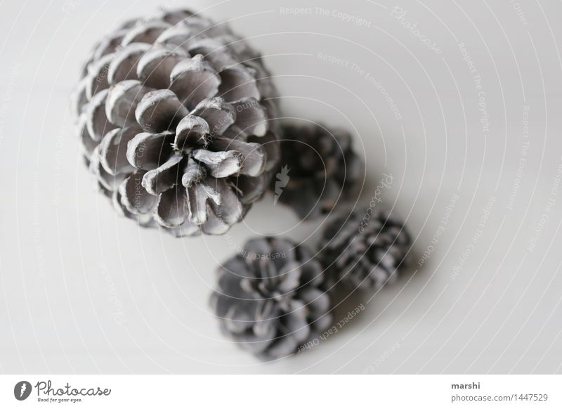 tattoo Sign Moody Cone White Bright Christmas decoration Decoration Interior shot Close-up Isolated Image Neutral Background Shallow depth of field 4 Pine cone
