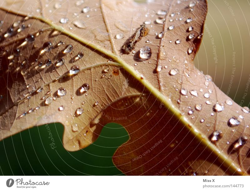 Water Green Leaf Brown Rain Drops of water Thunder and lightning Vessel Bad weather Oak tree Oak leaf