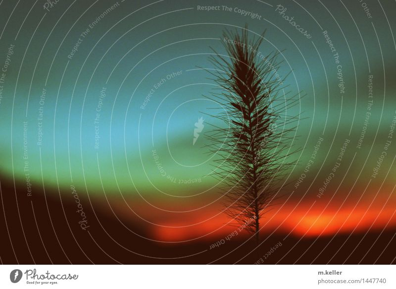Nature Plant Calm Environment Emotions Exceptional Moody Esthetic Trust Exotic Patient