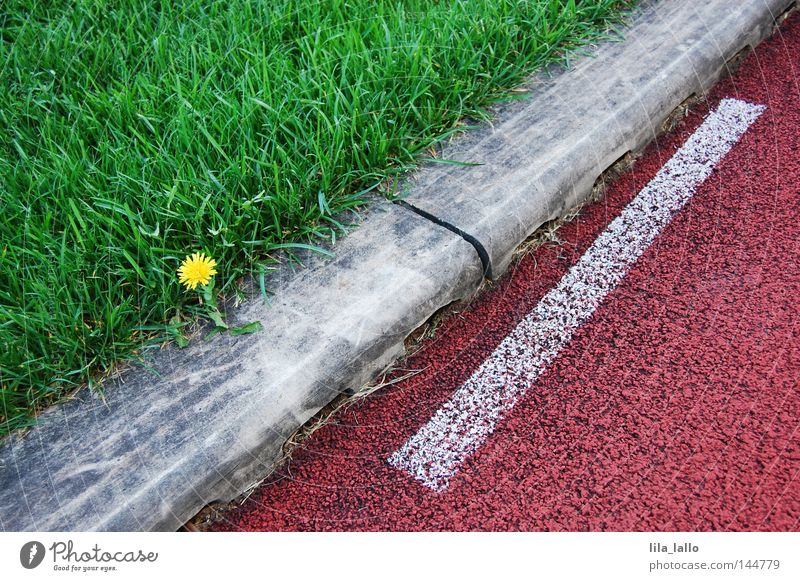 Plant Flower Sports Playing Grass Line Leisure and hobbies Lawn Grass surface Diagonal Dandelion Edge Racecourse Tilt Sporting grounds Across
