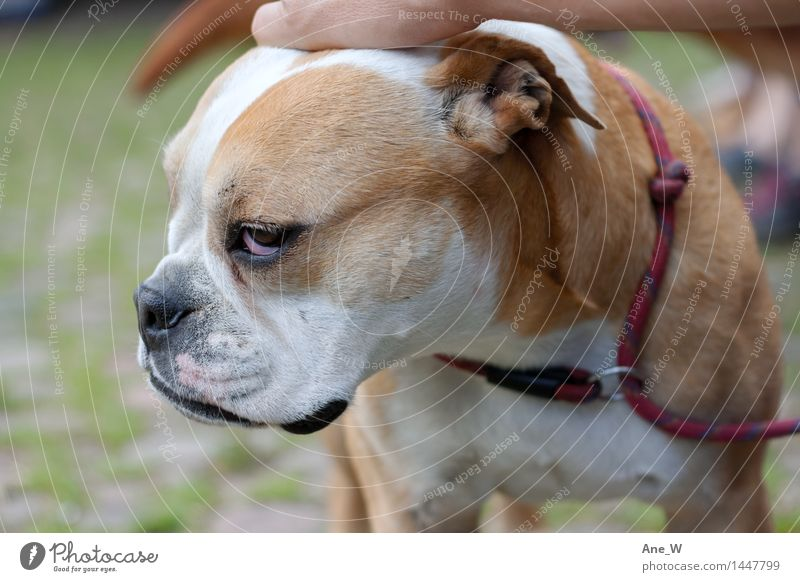 dog days Park Dog 1 Animal Dog lead Touch Stand Nerdy Cute Emotions Love of animals Self Control Reluctance Serene Near Friendship Relationship Expectation