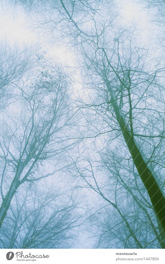 windy and cold Environment Nature Plant Elements Air Sky Cloudless sky Winter Climate Weather Bad weather Wind Fog Ice Frost Snow Tree Foliage plant Wild plant