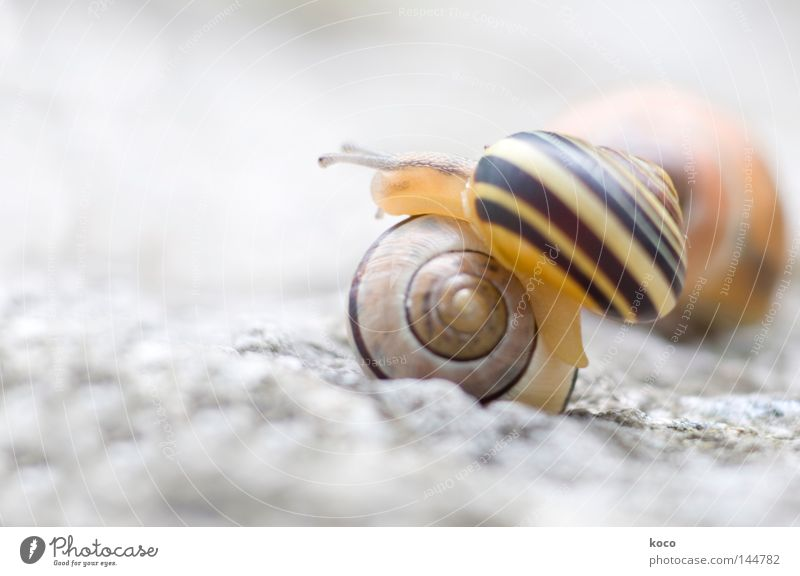 all over the place Snail Snail shell Yellow Spiral Upward Round Circle Bright Hurdle Animal