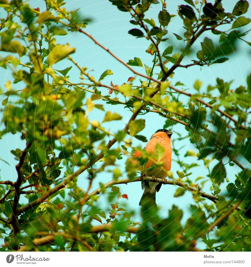 Nature Tree Green Plant Leaf Animal Spring Orange Bird Small Environment Sit Natural Hide Crouch Hidden