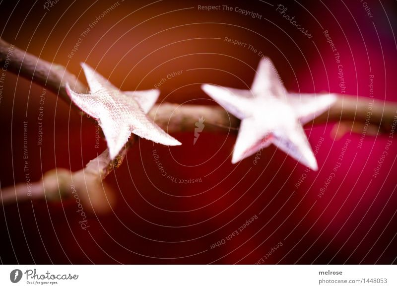 no starfish Elegant Style Christmas & Advent Twigs and branches Decoration Star (Symbol) Patch of colour Anticipation Think Glittering To enjoy Illuminate Lie