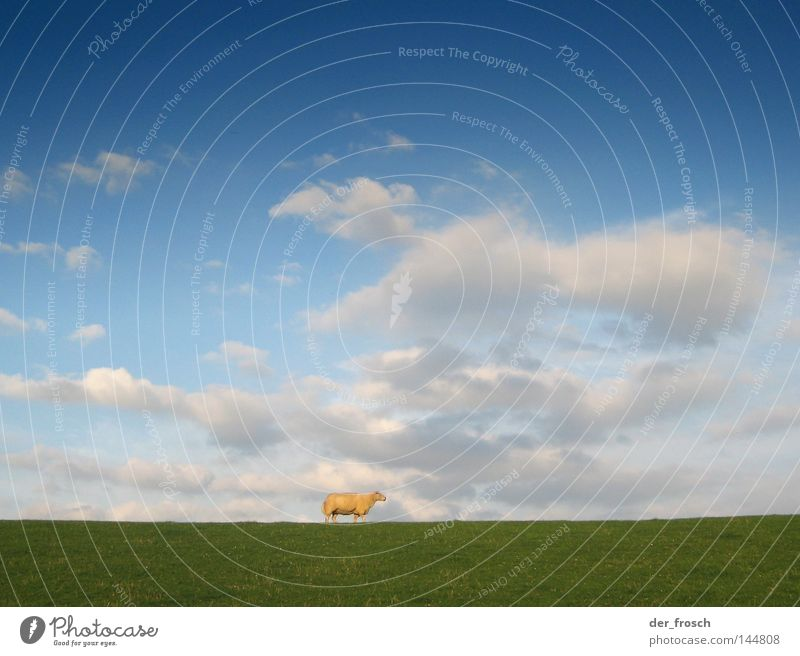 Sky Green Blue Clouds Loneliness Meadow Grass Sheep Mammal Wool Dike Lawnmower