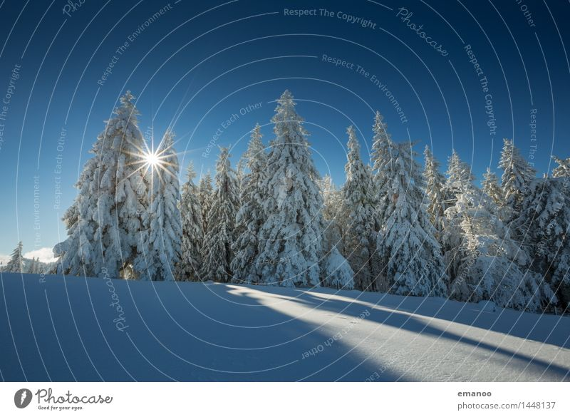 Sun in the winter forest Vacation & Travel Tourism Winter Snow Winter vacation Mountain Hiking Nature Landscape Air Sky Weather Ice Frost Plant Tree Forest Hill