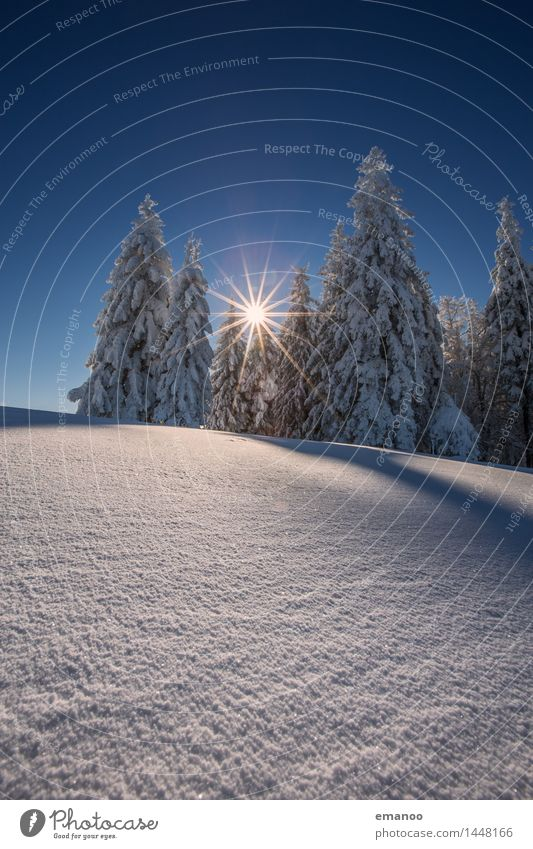 Sky Nature Vacation & Travel Tree Landscape Winter Forest Cold Mountain Snow Snowfall Tourism Ice Hiking Tall Trip