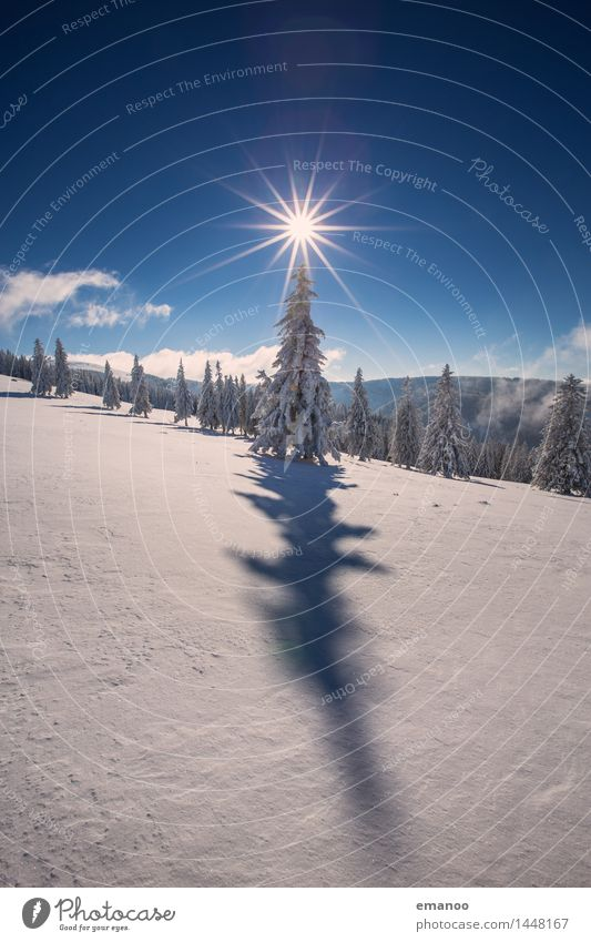 Sky Nature Vacation & Travel Christmas & Advent Sun Tree Landscape Winter Forest Cold Mountain Snow Freedom Bright Air Ice