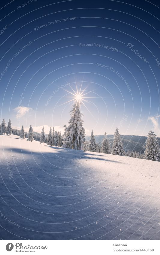 Sky Nature Vacation & Travel Christmas & Advent Plant Blue Sun Tree Landscape Winter Forest Cold Mountain Snow Freedom Bright