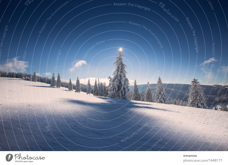Sky Nature Vacation & Travel Tree Landscape Winter Forest Cold Mountain Snow Freedom Weather Tourism Air Ice Hiking
