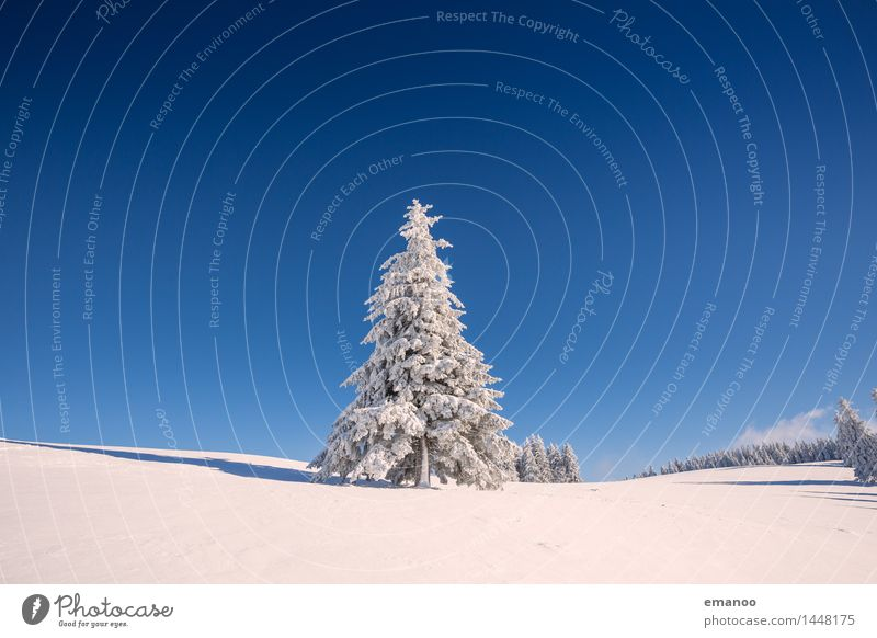 Sky Nature Vacation & Travel Plant Blue White Tree Landscape Winter Forest Cold Mountain Snow Freedom Weather Tourism