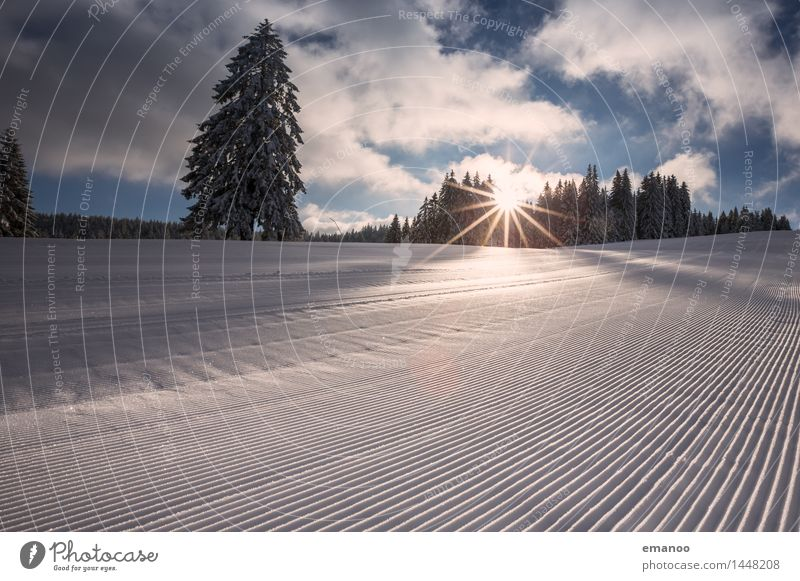 runway Lifestyle Vacation & Travel Tourism Winter Snow Winter vacation Sports Winter sports Ski run Nature Landscape Forest Hill Alps Line Stripe Cold Athletic