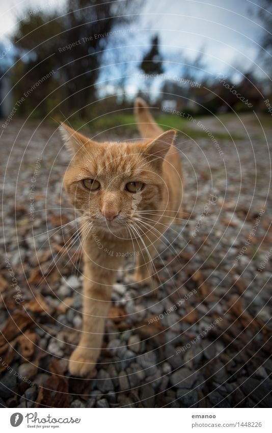 Cat Sky Animal Emotions Garden Stone Friendship Living or residing Walking Threat Soft Curiosity Trust Pelt Pet Animal face