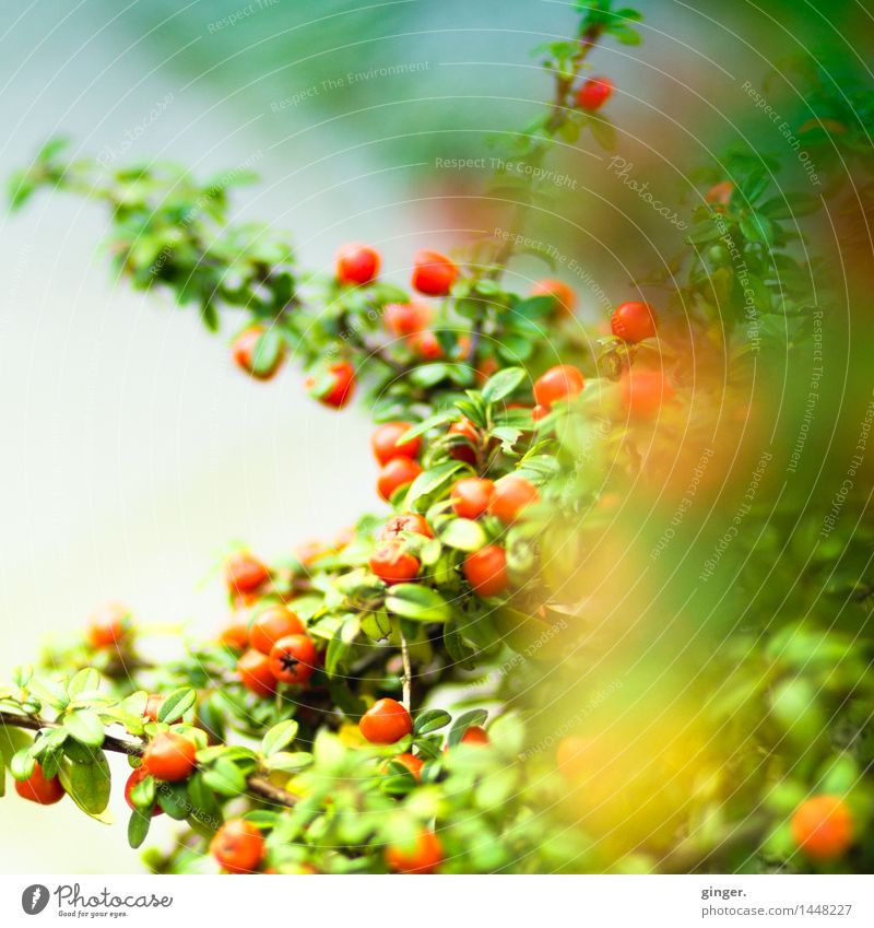 Is spring coming soon? Nature Plant Bushes Leaf Blue Green Red Spring Berries Round Branch Twig Many Blur Muddled Seasons Fresh Natural Gaudy Colour photo