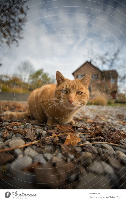 domestic cat Lifestyle Living or residing House (Residential Structure) Garden Nature Earth Sky Clouds Detached house Places Animal Pet Cat 1 Stone Looking Wait