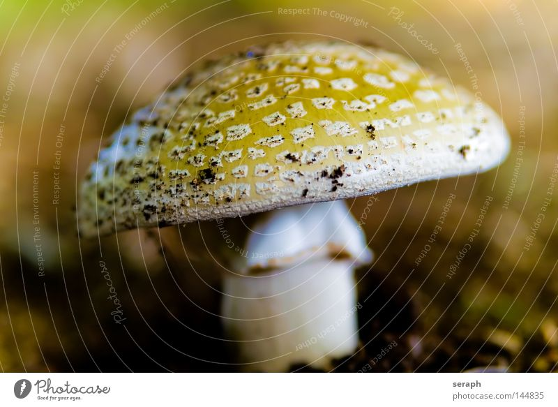 Nature Environment Autumn Earth Growth Nutrition Perspective Stalk Organic produce Ecological Mushroom Environmental protection Autumnal Cover Biology Spotted