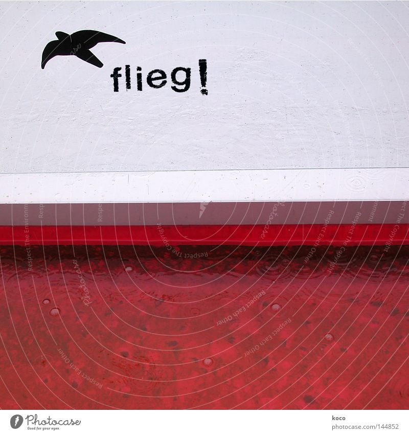 Fly! Bird Flying Red Free Swallow Freedom Sky Signs and labeling Joy Liberate