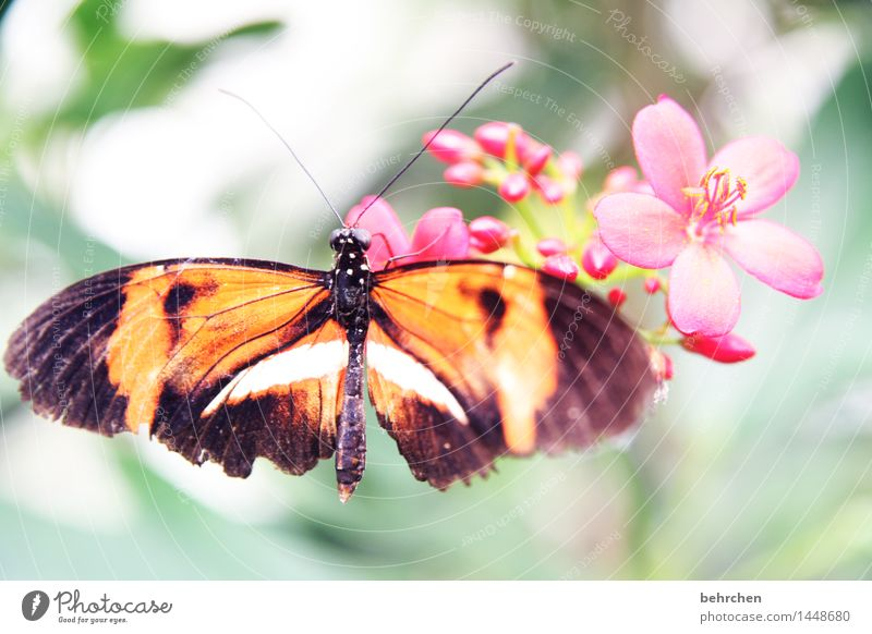 flower Nature Plant Animal Spring Summer Beautiful weather Flower Leaf Blossom Garden Park Meadow Wild animal Butterfly Wing 1 Observe Blossoming Fragrance