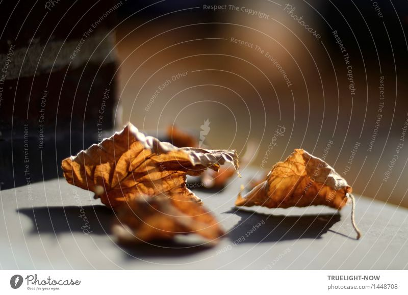 discussion of the situation Nature Sun Autumn Beautiful weather Leaf Deserted House (Residential Structure) Wall (barrier) Wall (building) Facade Window