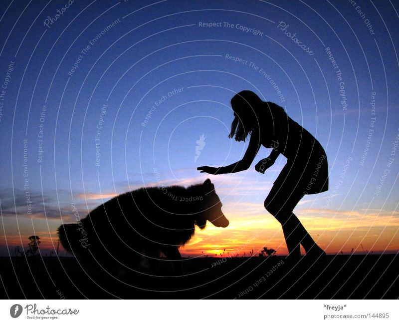 untouchable Blue Sunset Dog Evening Vacation & Travel Household evening sky. sky freki resin fox Dusk