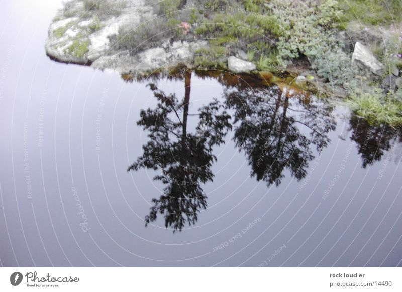 Reflections of NorWay Tree Green Norway Lake Pensive Water Landscape Calm Self portrait