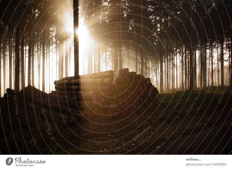 Nature Naked Forest Environment Tree trunk Illuminate Events Spruce Coniferous forest Spruce forest Rural conservation