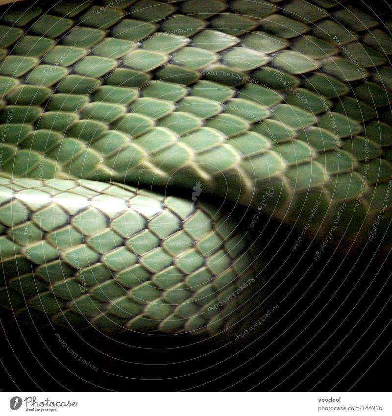Morphology of scales Reptiles Snake Viper Molt Snake skin Green Glittering Dangerous Animal Amphibian Skin choke strangling nimble Movement Motion blur Scales