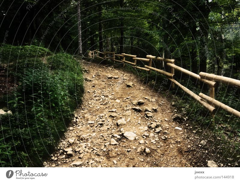 Forest Dark Above Stone Lanes & trails Power Hiking Going Force Forwards Mountain Footpath Fence Upward Handrail Banister