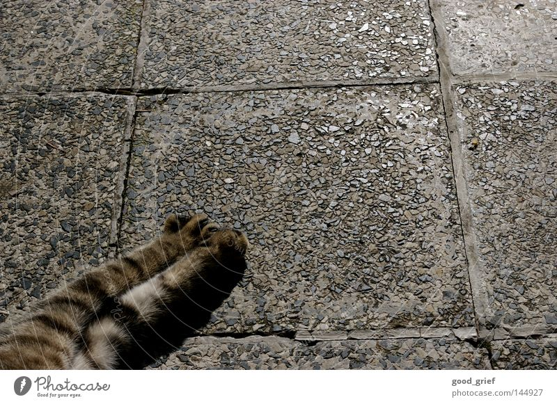 Cat Black Gray Stone Floor covering Pelt Paw Prefab construction Claw