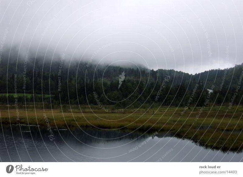 Fog on Norway Lake Green Grass Dark Forest Tree Damp Reflection Bog foggy