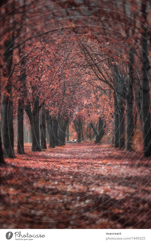 autumn Avenue Autumn Autumnal Seasons Multicoloured To fall Fallen Leaf Autumn leaves Red Lanes & trails Tree Chestnut tree Nature Natural