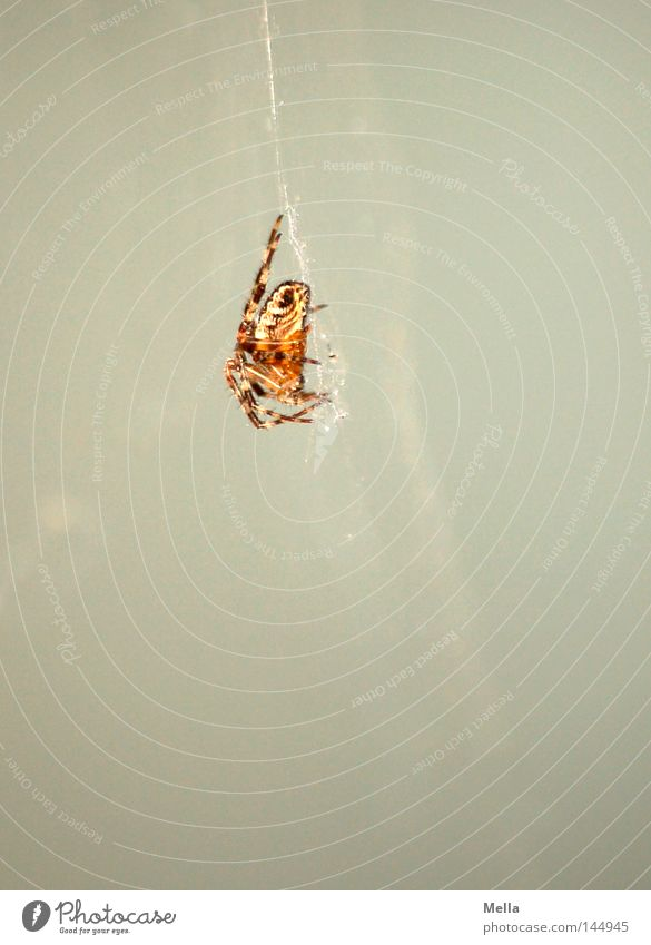 White Gray Wait Sit Observe Hang Spider Poison Stick Crouch Spider's web Sticky Cross spider