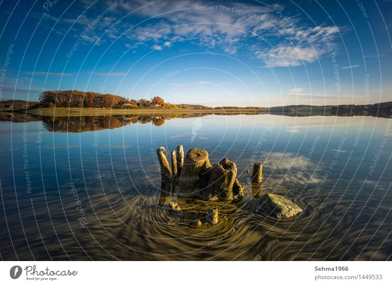 Autumn colours and drifting leaves on the lake Nature Landscape Plant Clouds Sun Sunlight Bad weather Tree Grass Moss Lakeside Beach Pond Warm-heartedness