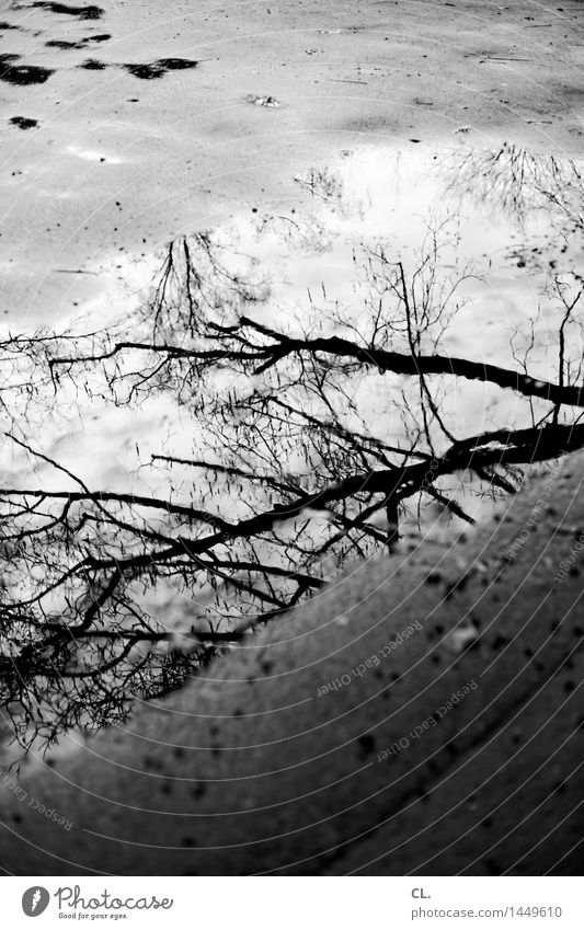 puddle Environment Nature Water Autumn Winter Climate Weather Bad weather Rain Tree Branch Ground Wet Gloomy Transience Puddle Black & white photo Exterior shot