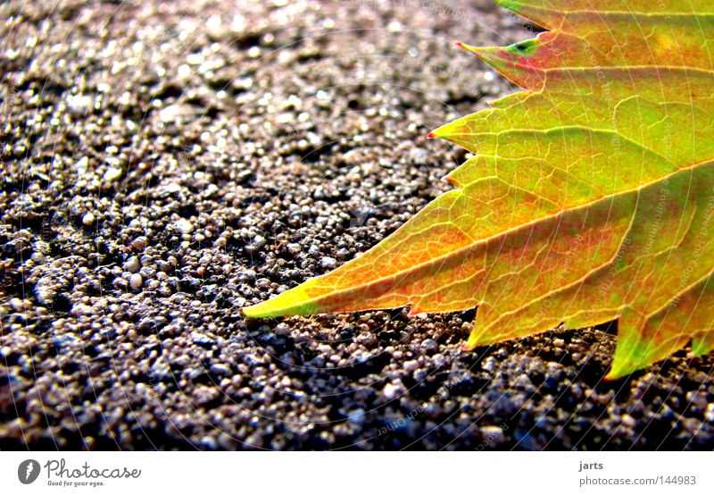 autumnal Autumn Leaf Autumn leaves Street Lanes & trails Multicoloured Colour Autumnal jarts