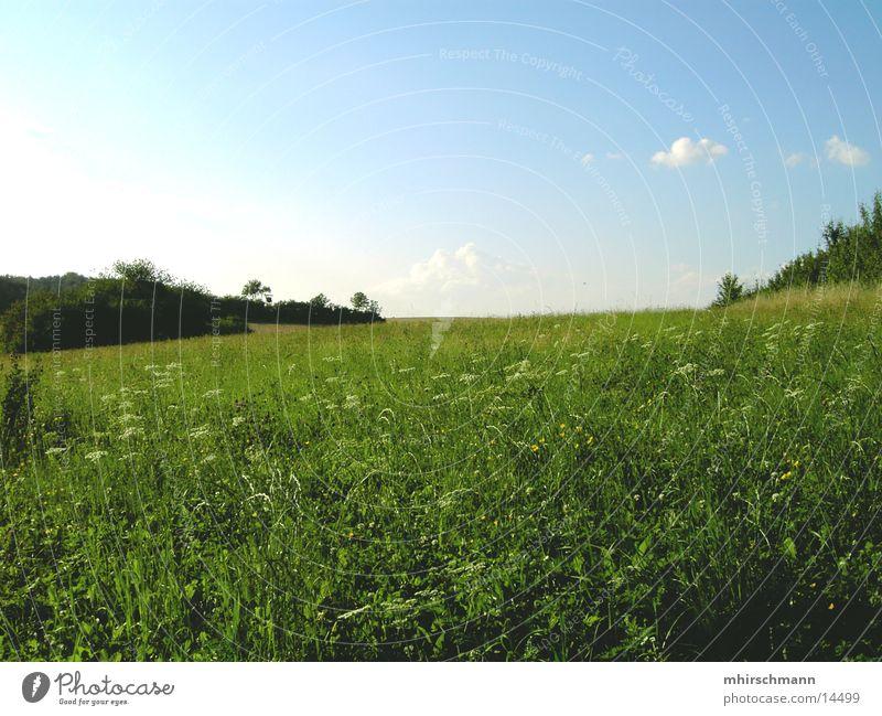 Sky Flower Green Blue Clouds Meadow Mountain Field Earth Bushes