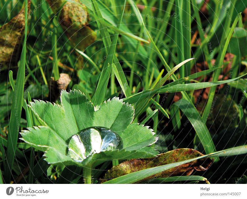 Green Water White Leaf Autumn Meadow Grass Brown Weather Drops of water Wet Transience Beautiful weather Clarity Thin Stalk