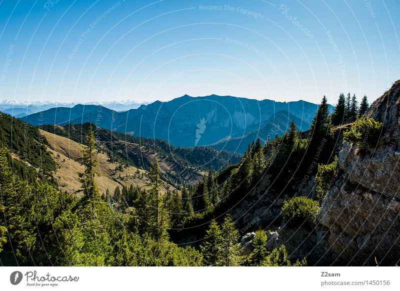outlook Leisure and hobbies Hiking Nature Landscape Cloudless sky Autumn Beautiful weather Forest Alps Mountain Blue Green Joie de vivre (Vitality) Humble