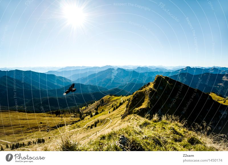 sovereignty over the air Leisure and hobbies Hiking Nature Landscape Sky Sun Summer Autumn Beautiful weather Meadow Alps Mountain Peak Bird Flying Free Gigantic