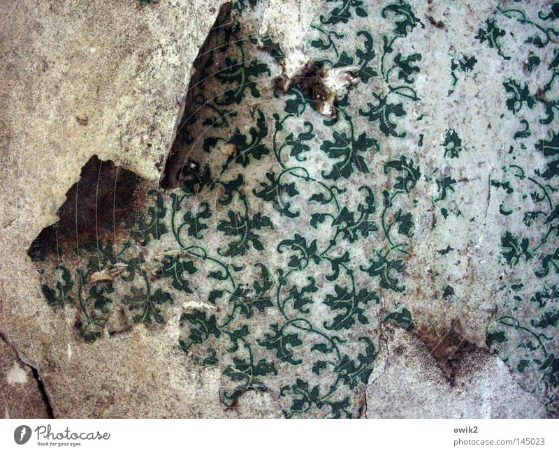 Les feuilles mortes Redecorate Wallpaper Leaf Wall (barrier) Wall (building) Ornament Old Historic Broken Green Loneliness Arrangement Past Transience