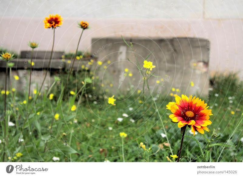 Flower Summer Meadow Grass Garden Lawn Round Horticulture Gardener Assassin Criminal Violet plants Anemone Flowerbed Pansy Aster