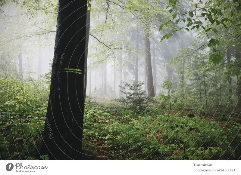 Marked. Environment Nature Plant Autumn Fog Tree Forest Dark Natural Gray Green Black Emotions Threat Marker line Colour photo Exterior shot Deserted Day