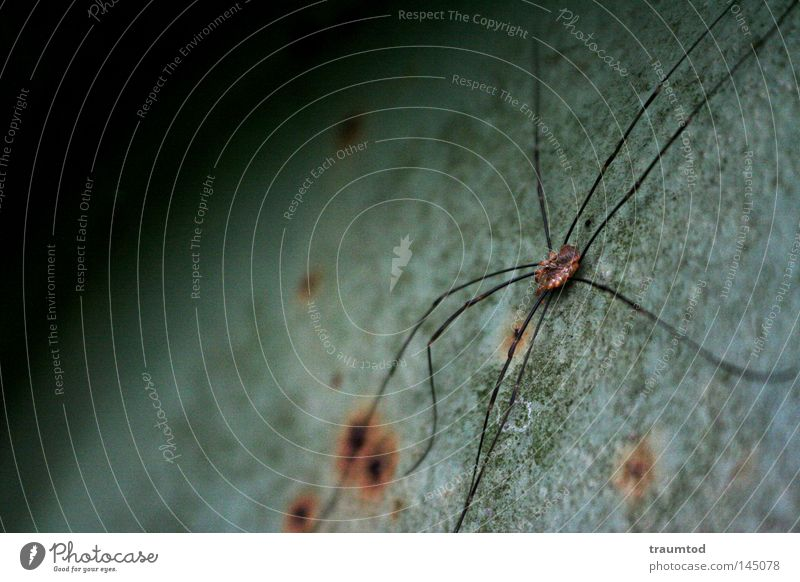 Thekla. Spider Animal Nature Free Silk Climbing Crawl Useful Panic Macro (Extreme close-up) Zoo Prey Insect Green Gray Sphere Half Semicircle Rust Legs