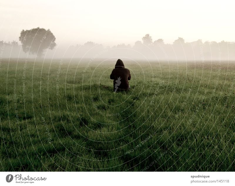 wait for no one Forest Meadow Grass Blade of grass Clearing Tree Field Far-off places Morning Morning fog Fog Patch of fog Cold Wet Summer Summer morning Crouch