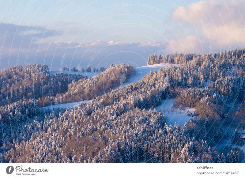 Powder sugared Environment Nature Landscape Clouds Winter Beautiful weather Ice Frost Snow Forest Hill Mountain Snowcapped peak Cold Black Forest Slope