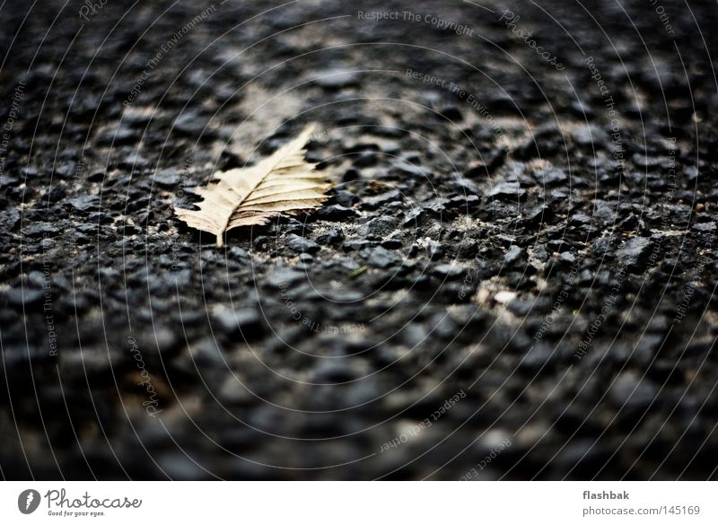 Leaf Loneliness Autumn Stone Asphalt Depth of field Minerals