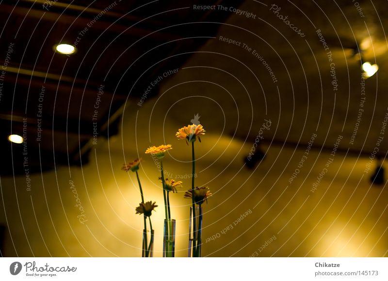 Beautiful Flower Plant Yellow Gastronomy Cozy Harmonious Vase Roadhouse