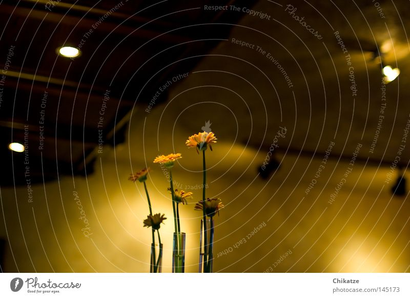 Flowers. Plant Yellow Vase Gastronomy Light Shadow Cozy Harmonious Beautiful Roadhouse