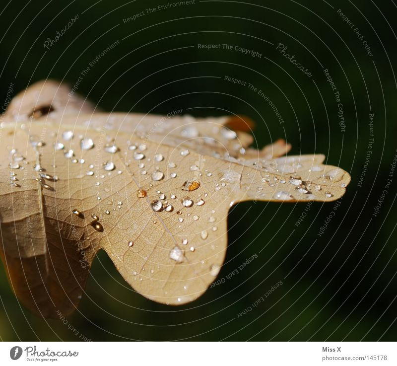 the beautiful day Colour photo Exterior shot Macro (Extreme close-up) Water Drops of water Autumn Bad weather Rain Thunder and lightning Leaf Brown Green Vessel